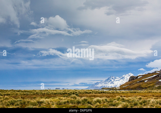 Peggotty Bluff, South Georgia, South Atlantic Ocean, Polar Regions - Stock Image