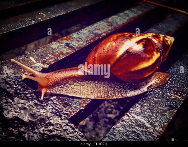Sliding snail slowly - Stock-Bilder