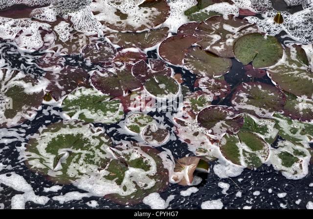 pollution in garden pond - Stock Image