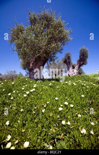 Cellino San Marco Italy  city photos : Tenute Al Bano Carrisi, Cellino San Marco, Puglia, Italy Stock Image