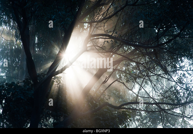 Sunburst through trees in India, Silhouette - Stock-Bilder