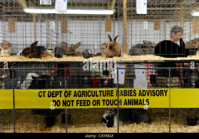 Goshen, Conneticut, USA. 2nd September 2012. Rabies sign required by Connecticut Department of Agriculture at Rabbit - Stock Image