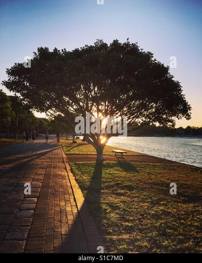 Sunset behind the tree near Rozelle Bay park. - Stock-Bilder