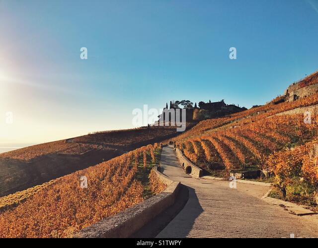 Way in the vineyard hill - Stock Image