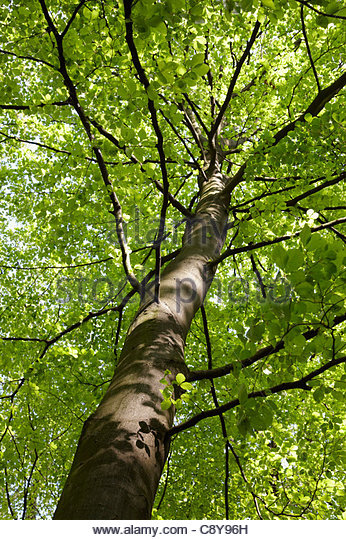 low angle view of tree - Stock Image