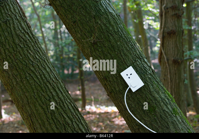 Electrical outlet on tree in forest - Stock Image