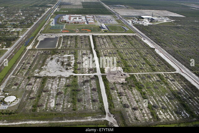 Apr 18, 2006 - West Palm Beach, Florida, U.S. - Part of the Callery Judge orange groves located south of the Seminole - Stock Image