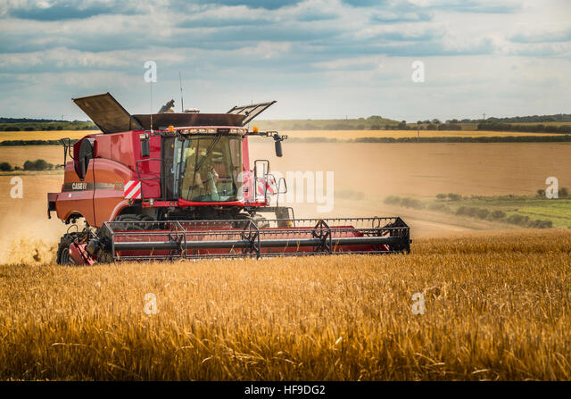 Combining a large barley field. - Stock Image