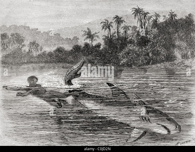 A young boy kicking a shark's tail to escape its attack, in 19th century Colombia. - Stock Image