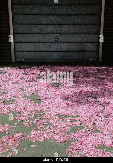 Scattering of fallen pink blossom on ground in front of metal garage door - Stock Image