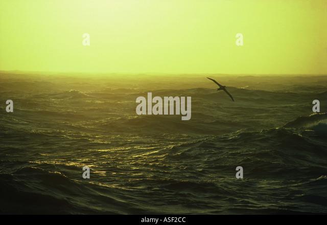 Wandering albatross soaring over turbulent seas at dusk Southern Ocean  - Stock Image