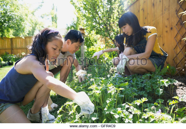 Family gardening in backyard - Stock Image