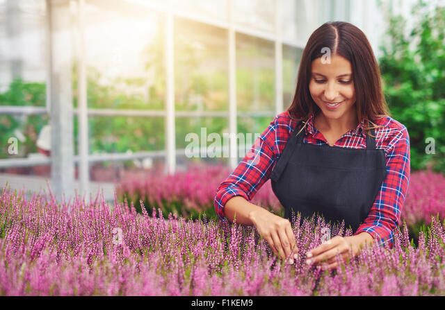 Successful young woman entrepreneur working in a greenhouse tending plants in her nursery as she cultivates them - Stock Image