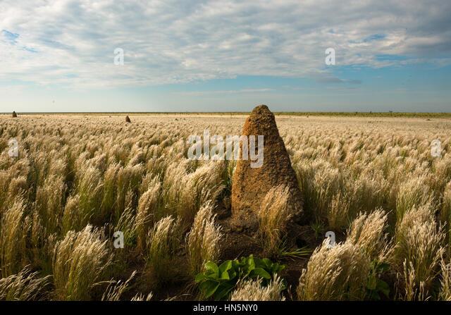 Termite mound on the vast open grasslands of Emas National Park - Stock Image