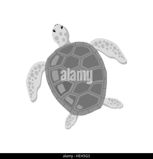 Turtle Isolated on White Background. Turtle isolated on white background design flat. Tortoise with a big black - Stock-Bilder