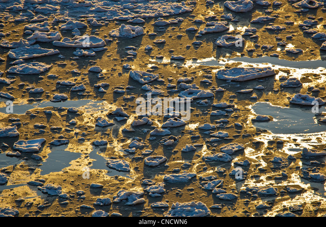 Ice chunks stranded at low tide, Turnagain Arm, Chugach State Park, Southcentral Alaska, Winter - Stock Image