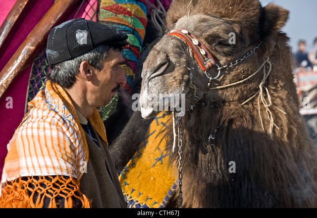 Camel Fights, Izmir. Turkey. - Stock Image