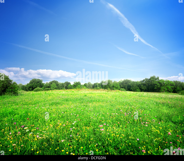 Bright meadow flowers on a sunny summer day - Stock Image
