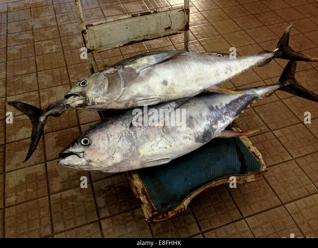 Oman, Muscat, Yellowfin tuna at market - Stock Image