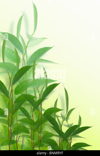 Young green plants on off white background - Stock Image