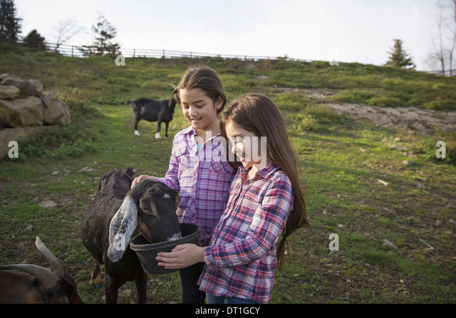 Two children young girls in the goat enclosure at an animal sanctuary - Stock Image