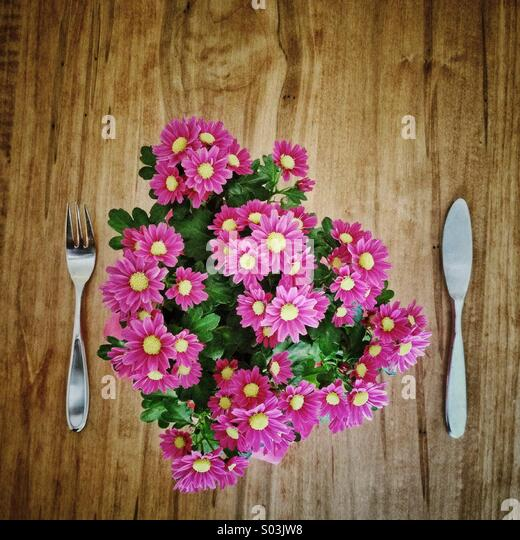 Pot of miniature pink daisies set on a wood table between a knife and fork as if for lunch. - Stock Image