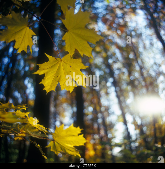 Autumn. - Stock-Bilder