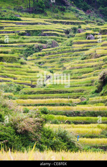 rice terraces in philippines. - Stock Image