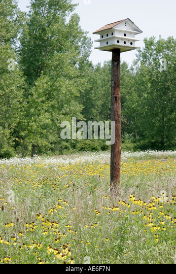 Toledo Ohio Oregon Maumee Bay State Park wildflower shining coneflower birdhouse - Stock Image