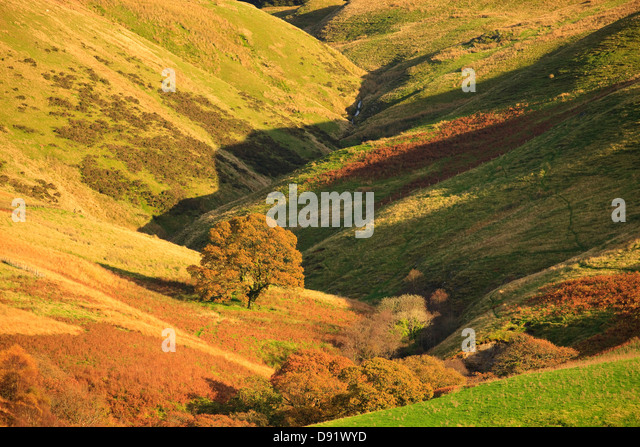 Autumn in rural countryside Tywi Valley Carmarthenshire Wales - Stock Image