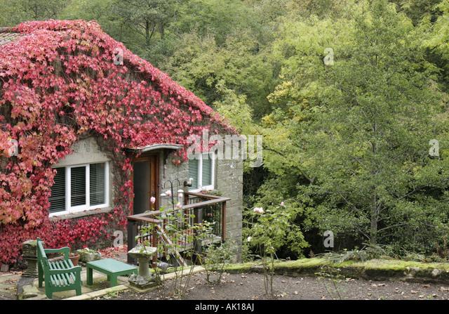 UK, England, Goathland, stone house, ivy, - Stock Image