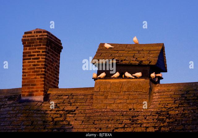 Dove cote on house farm roof Berkshire - Stock Image