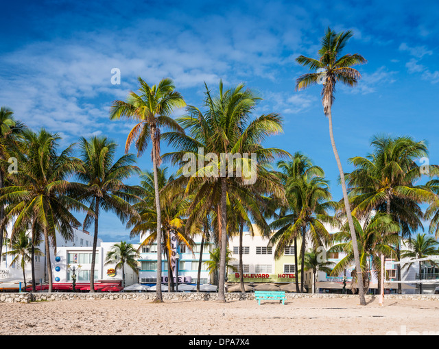 MIAMI, FLORIDA - JANUARY 6, 2014: Palm trees line Ocean Drive. The road is the main thoroughfare through South Beach. - Stock Image