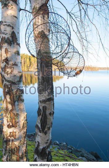 Net hanging from birch trees beside quiet lake. - Stock Image