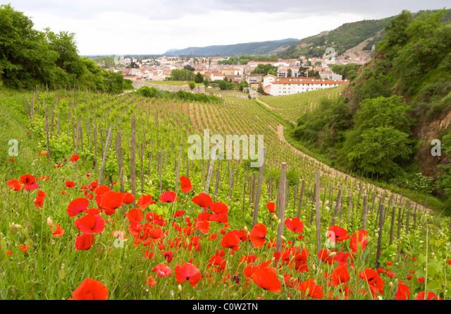 vineyard red poppies hermitage rhone france - Stock Image