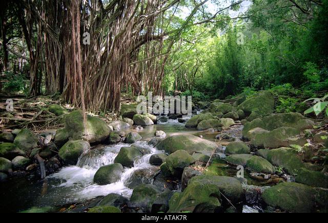 nuuanu stream, oahu, hawaii - Stock Image