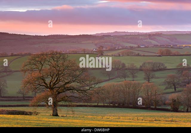 Early morning winter sunlight over rolling Devon countryside, Devon, England. Winter (February) 2014. - Stock Image