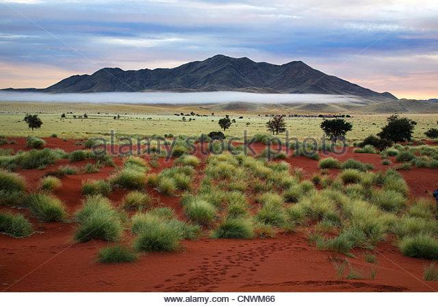 desert in the morning, Namibia, Namib Naukluft National Park - Stock Image