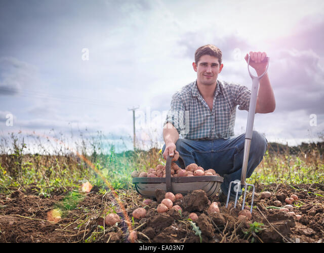 Portrait of farmer with basket of organic potatoes - Stock Image