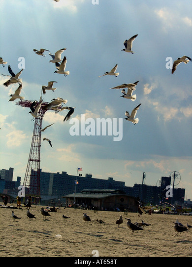 Summer Scene of the Silhouette of Many Seagulls and the Parachute Jump at Coney Island Amusement Park in Brooklyn - Stock Image