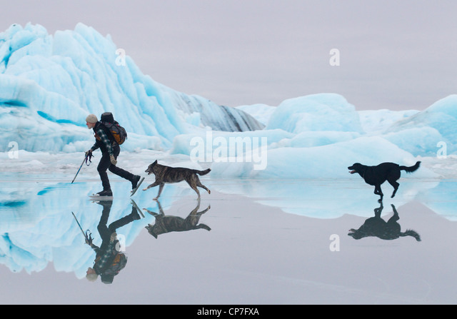 Man ice skating at Sheridan Glacier with two dogs with ice and icebergs in the background, Cordova, Alaska - Stock-Bilder