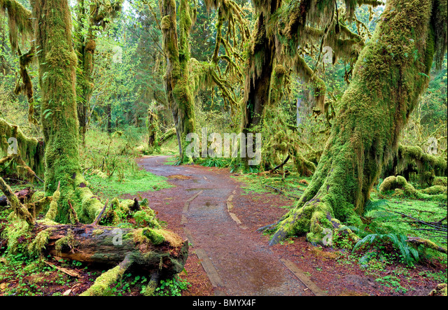 Path in Hall of Mosses. Hoh Rain Forest. Olympic National Park, Washington - Stock Image