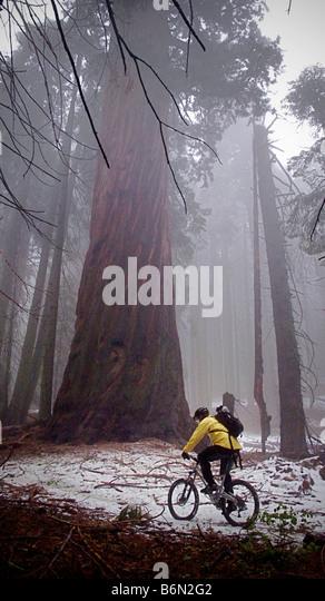 mountain biker on Bear Creek Trail, Camp Nelson, California - Stock Image