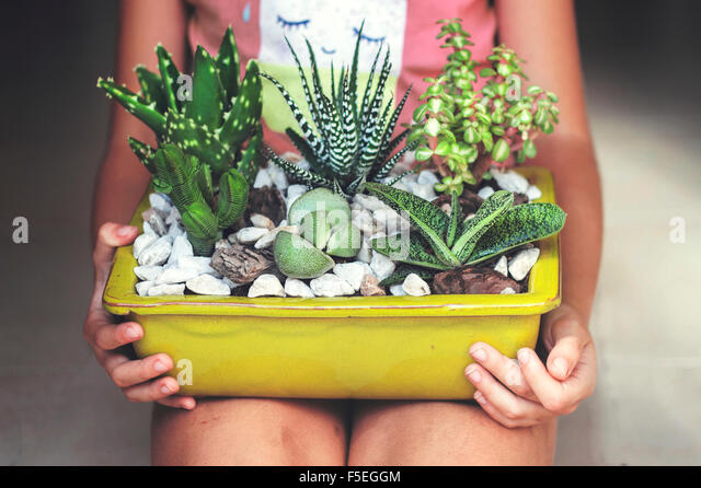 Girl sitting, holding a display of succulent plants - Stock Image