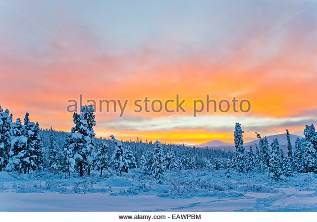 Sunset lighting up the sky in pink and orange over a snowy forest. - Stock-Bilder