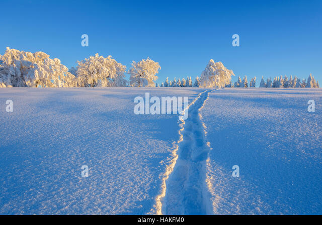 Tracks crossing a pristine snow covered landscape in winter in the Black Forest on Schauinsland near Freiburg in - Stock Image