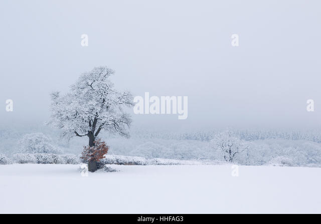 Winter trees, hedges and field covered in snow - Stock Image