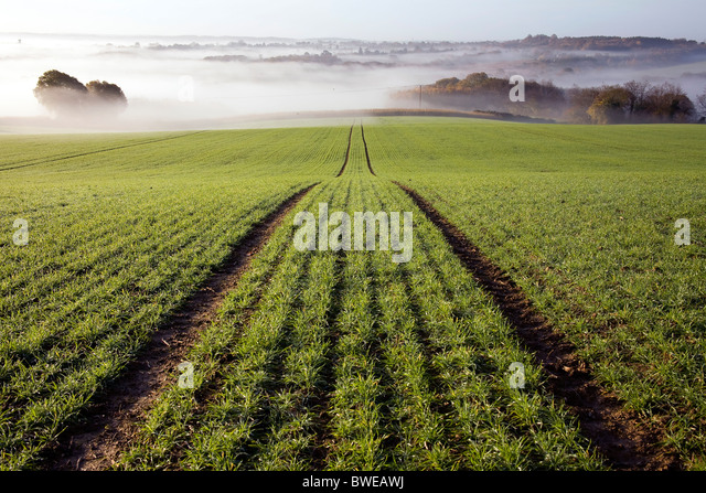 Misty morning view of Kentish countryside with recently planted field of winter wheat in autumn valley  Kent UK - Stock Image