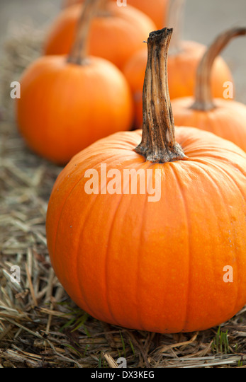 Autumn pumpkins, vibrant orange, close up - Stock Image