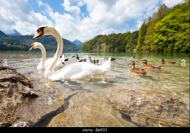 Alps lake with birds. Wide angle view. - Stock Image